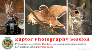 Raptor Photography Session @ Cedar Run Wildlife Refuge | Medford | New Jersey | United States