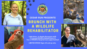 Brunch with a Wildlife Rehabilitator @ Medford | New Jersey | United States