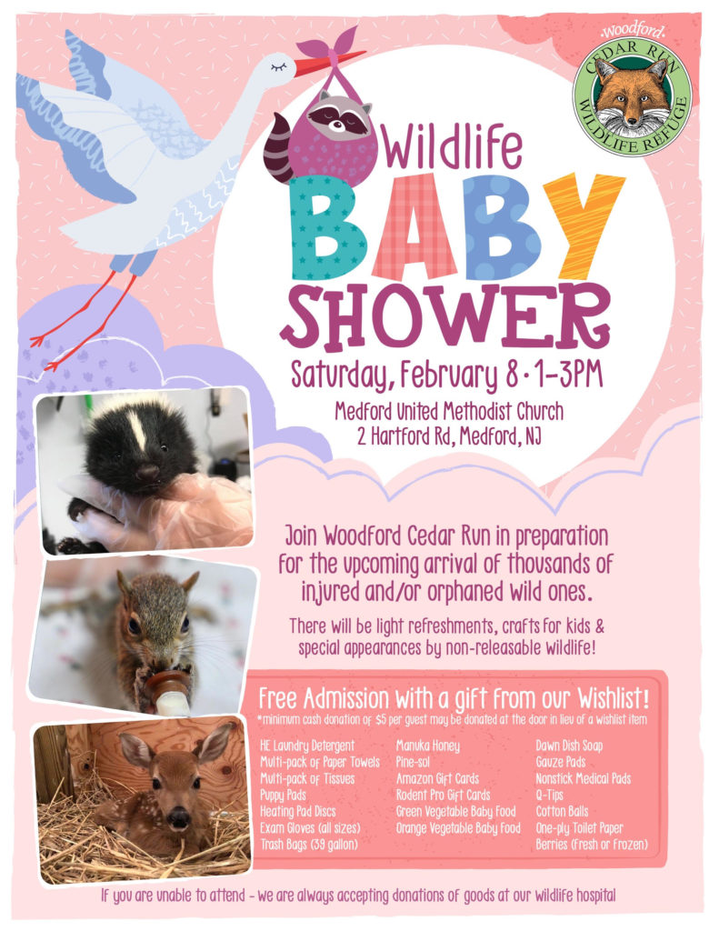 Wildlife Baby Shower @ Medford United Methodist Church | Medford | New Jersey | United States