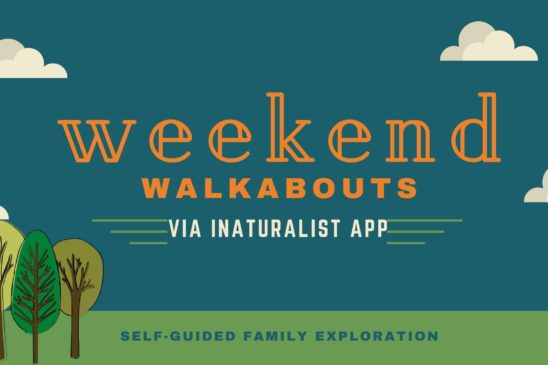 Weekend Walkabouts