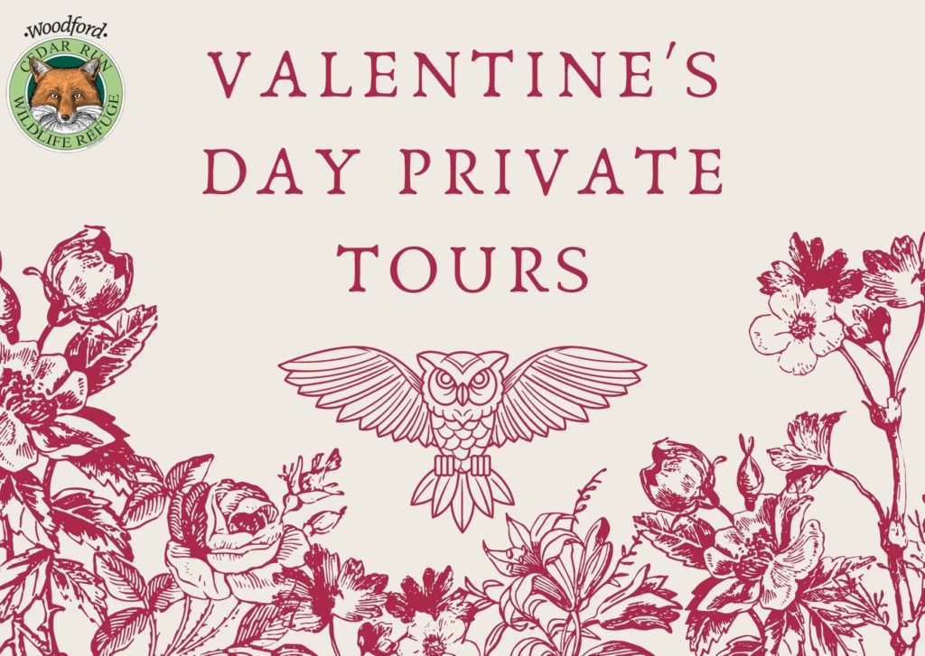 Valentine's Day Private Tours - Additional Date Added!